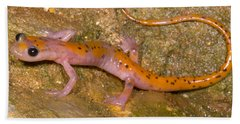 Cave Salamander Beach Sheet by Dante Fenolio