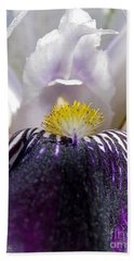 Beach Towel featuring the photograph Miniature Tall Bearded Iris Named Consummation by J McCombie