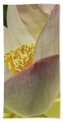 Nelumbo 'pink And Yellow' Beach Towel