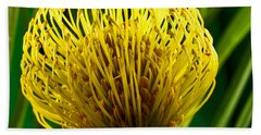 Picture Of A Pincushion Protea Beach Towel