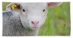 Young Sheep Beach Towel