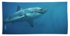 Great White Shark Carcharodon Beach Towel by Mike Parry