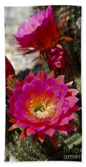 Pink Cactus Flowers Beach Sheet
