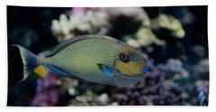Tropical Fish Beach Sheet by Carol Ailles