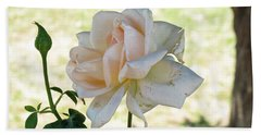 A Beautiful White And Light Pink Rose Along With A Bud Beach Towel by Ashish Agarwal