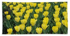 A Field Of Yellow Tulips In Spring Beach Towel by Eva Kaufman