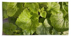 A Green Leafy Vegetable Plant After Watering In Bright Sunrise Beach Towel by Ashish Agarwal
