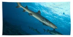 A Trio Of Whitetip Reef Sharks, Kimbe Beach Towel