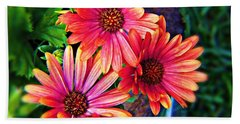 African Daisy Beach Sheet