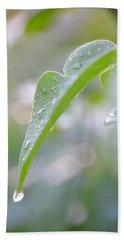 Beach Towel featuring the photograph After The Rain by JD Grimes