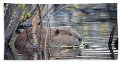 American Beaver Beach Towel by Ronald Lutz