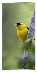 American Goldfinch - Peaceful Beach Sheet by Travis Truelove