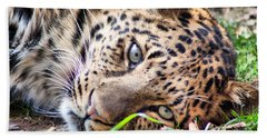 Beach Towel featuring the photograph Amur Leopard by Lynne Jenkins