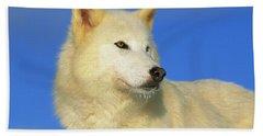 Arctic Wolf Canis Lupus Portrait Beach Towel