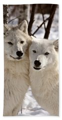 Arctic Wolves Close Together In Winter Beach Towel