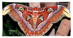 Atlas Moth Beach Towel