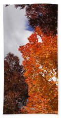 Beach Towel featuring the photograph Autumn Looking Up by Mick Anderson