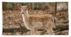 Beach Towel featuring the photograph Beautiful Fawn by Jean Haynes