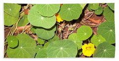 Beautiful Round Green Leaves Of A Plant With Orange Flowers Beach Towel