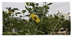 Beautiful Yellow Flower In A Garden Beach Towel by Ashish Agarwal