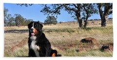 Bernese Mountain Dog In California Chaparral Beach Sheet