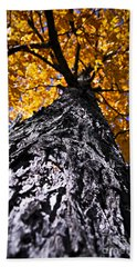 Big Autumn Tree In Fall Park Beach Towel
