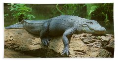 Big Gator On A Log Beach Towel by Myrna Bradshaw