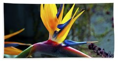Bird Of Paradise Beach Towel by Patricia Griffin Brett