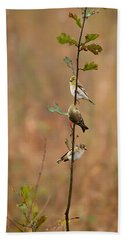 Bird Stack Beach Towel by Dan Wells