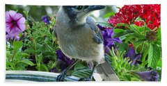 Beach Towel featuring the photograph Blue Jay At Water by Debbie Portwood