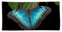 Blue Morpho Butterfly Beach Towel