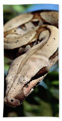 Boa Constrictor Boa Constrictor Beach Sheet by Claus Meyer