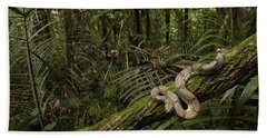 Boa Constrictor Boa Constrictor Coiled Beach Sheet by Pete Oxford