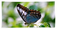 Beach Towel featuring the photograph Bright Blue Butterfly by Peggy Franz