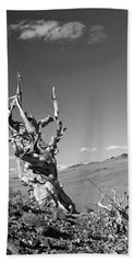 Bristlecone Pine And Cloud Beach Sheet