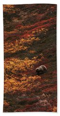 Brown Bear Denali National Park Beach Towel