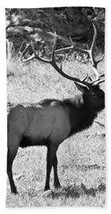 Bull Elk Beach Sheet