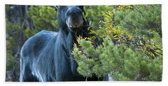 Bull Moose Beach Towel