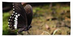 Butterfly Feeding  Beach Sheet by Ramabhadran Thirupattur