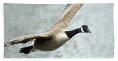 Canada Goose In Flight, Montreal Beach Towel