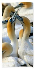Cape Gannet Courtship Beach Towel