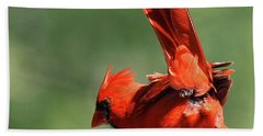 Cardinal-a Picture Is Worth A Thousand Words Beach Sheet