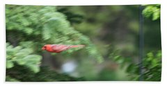 Beach Towel featuring the photograph Cardinal In Flight by Thomas Woolworth