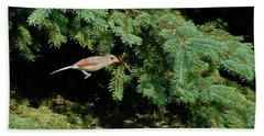 Beach Towel featuring the photograph Cardinal Just A Hop Away by Thomas Woolworth