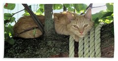 Beach Towel featuring the photograph Catnap Time by Thomas Woolworth