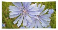 Chicory Wildflower - Cichorium Intybus L.  Beach Towel