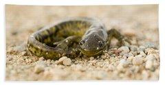 Close Up Tiger Salamander Beach Towel