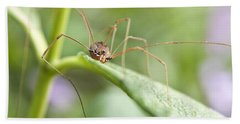 Beach Sheet featuring the photograph Creepy Crawly Spider by Jeannette Hunt