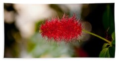 Beach Sheet featuring the photograph Crimson Bottle Brush by Tikvah's Hope
