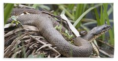 Beach Towel featuring the photograph Cuddling Snakes by Jeannette Hunt